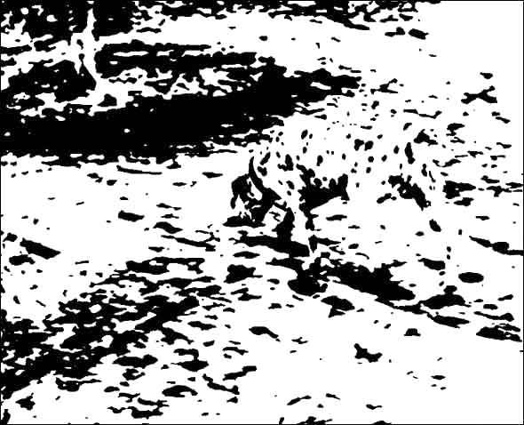 【アイコラ】 水玉コラ14 【革命】 [無断転載禁止]©bbspink.comニコニコ動画>1本 ->画像>1375枚